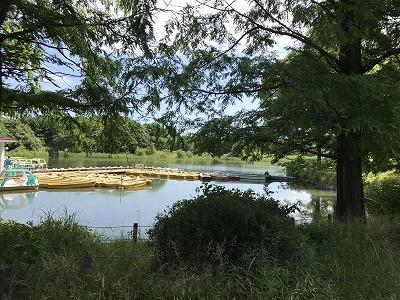 国営昭和記念公園入り口内の池