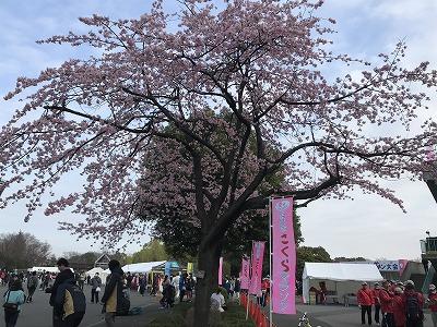 第28回熊谷さくらマラソン大会会場さくら