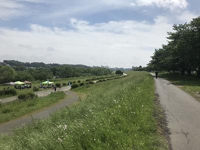 第4回UPRUN川崎等々力河川敷スプリングマラソン景色