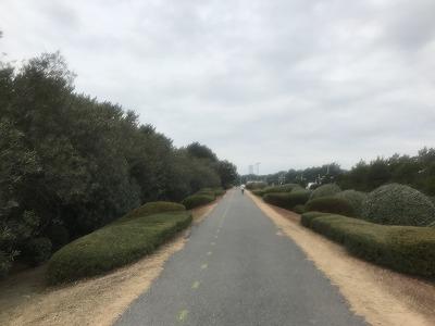 第1回谷川真理クリスマスマラソンハーフマラソンスタート5キロ地点